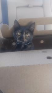 hick in a box